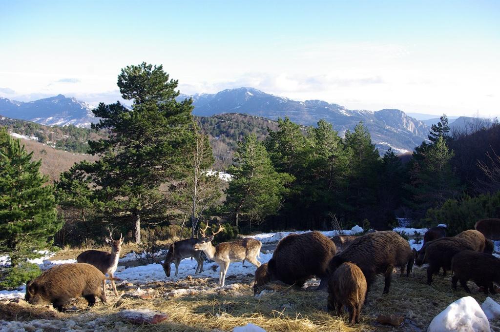 La propriété du Bouchard à Camps sur l'Agly et son parc animalier dirigé par Nicole Paul